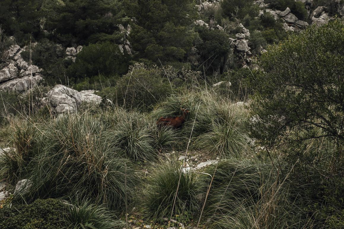 Constantin_Gerlach_Standert_Mallorca_36